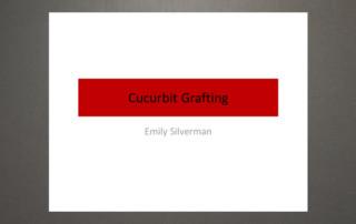Cucurbit grafting