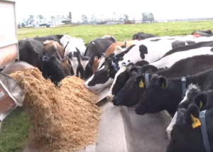 Dairy Unit Image