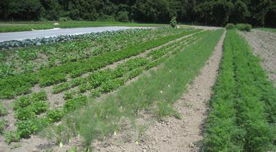 Intervale_farm