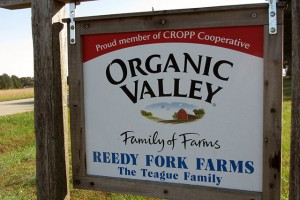 Reedy Fork Organic Farm is part of the Organic Valley cooperative of dairy farms. (Photo: JJ Richardson/CEFS)