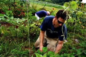 agroecology-garden
