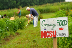 Faculty and staff volunteers weed around crops at the Agroecology Education Farm. Photo © Roger Winstead