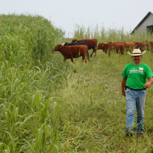 "Johnny Rogers of Rogers Cattle Company moves his cattle into their next allotment of ""Ray's Crazy Mix,"" demonstrating intensive grazing of alternative forages at an Amazing Grazing workshop. Photo by Sarah Lyons"