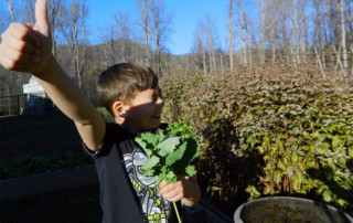 Kids picking kale