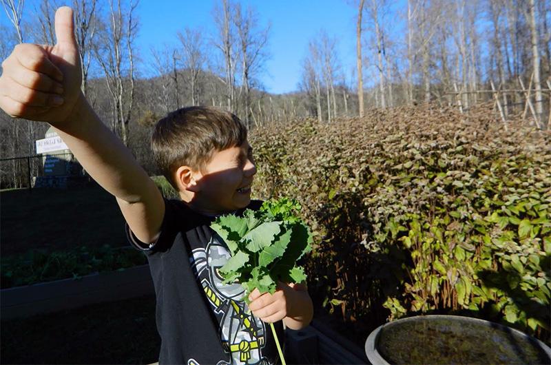 Kids picking kale