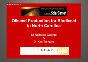 oilseed-production