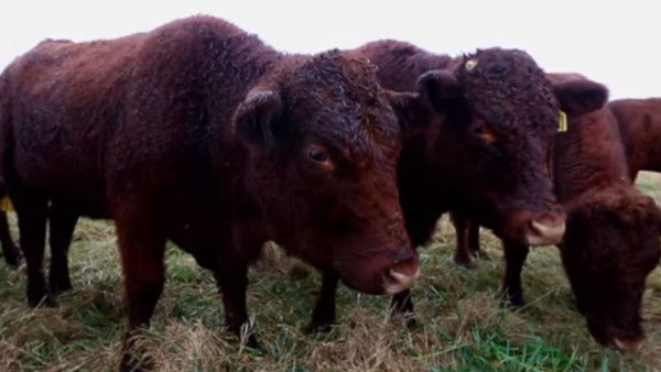 pasture-management-2015