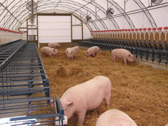 CEFS swine hoop house